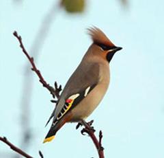 Chef de projets Ornithologue – h/f Poste basé à Marseille (13)