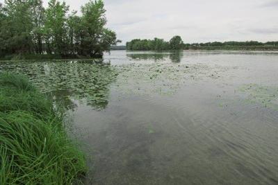 Dossier CNPN du Projet de rivière artificielle à Saint-Didier–sur-Chalaronne (01)