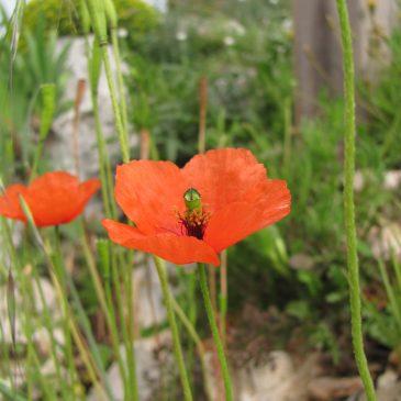 Chef de projets Botaniste – h/f Poste basé à Marseille (13)